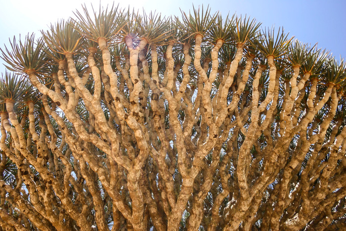 What is to become of Socotra?