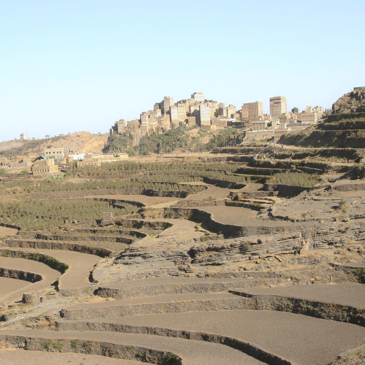 Khat- terrace cultivation