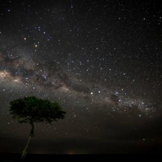 Stars in the Masai Mara
