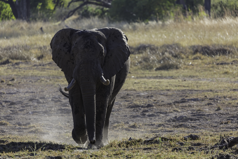 Xana Elephant