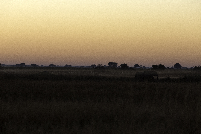 Lebala Sunrise