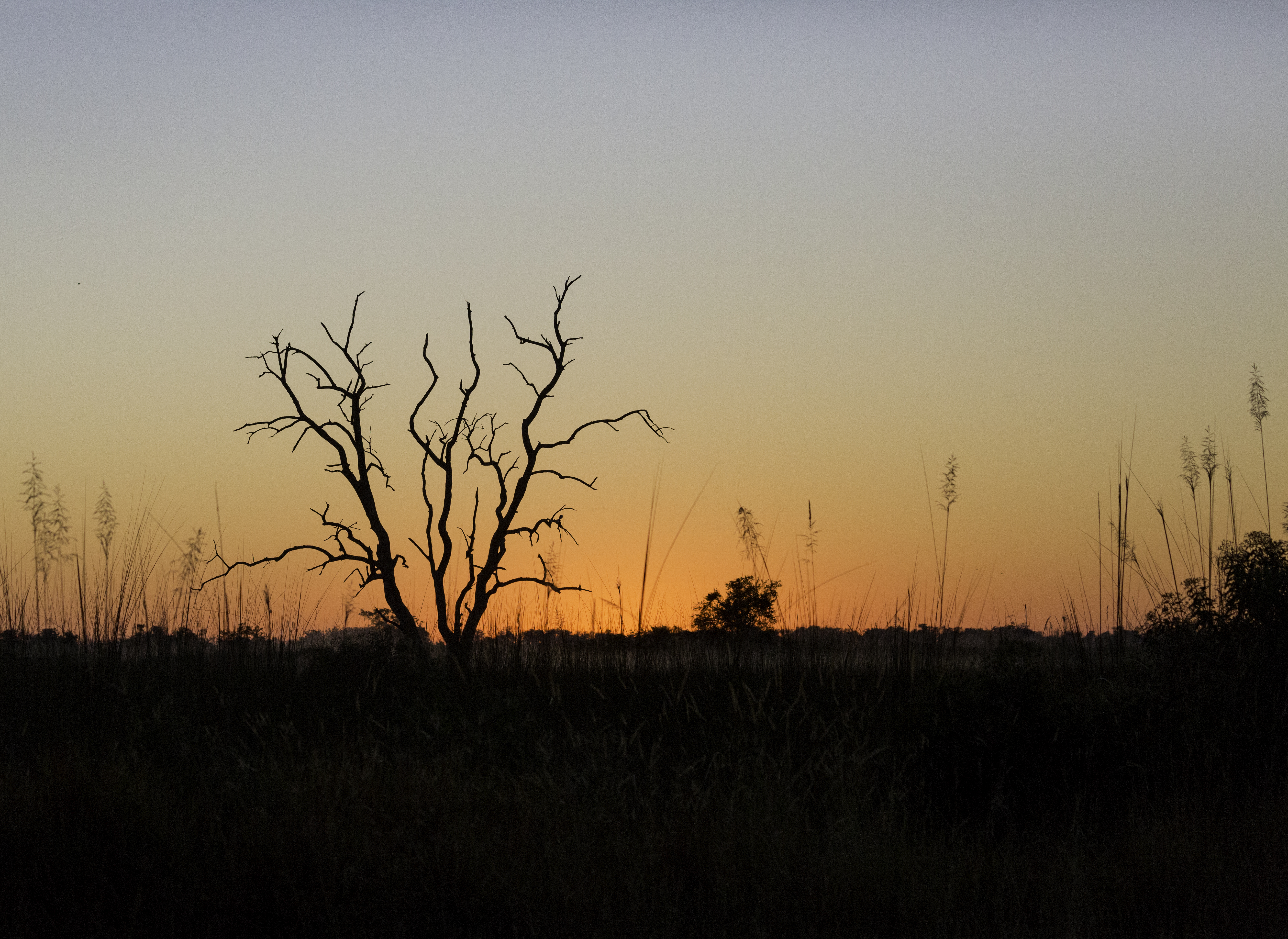 Xana Sunrise