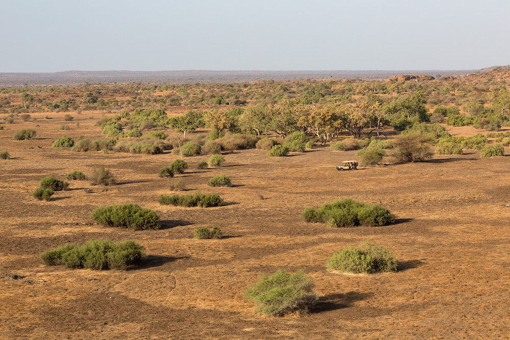 Botswana- a dry arid land where rain means more than just filling up lakes and waterholes.