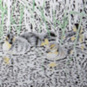 coloured ducklings.jpg