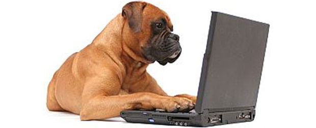 dog_computer (1).jpg