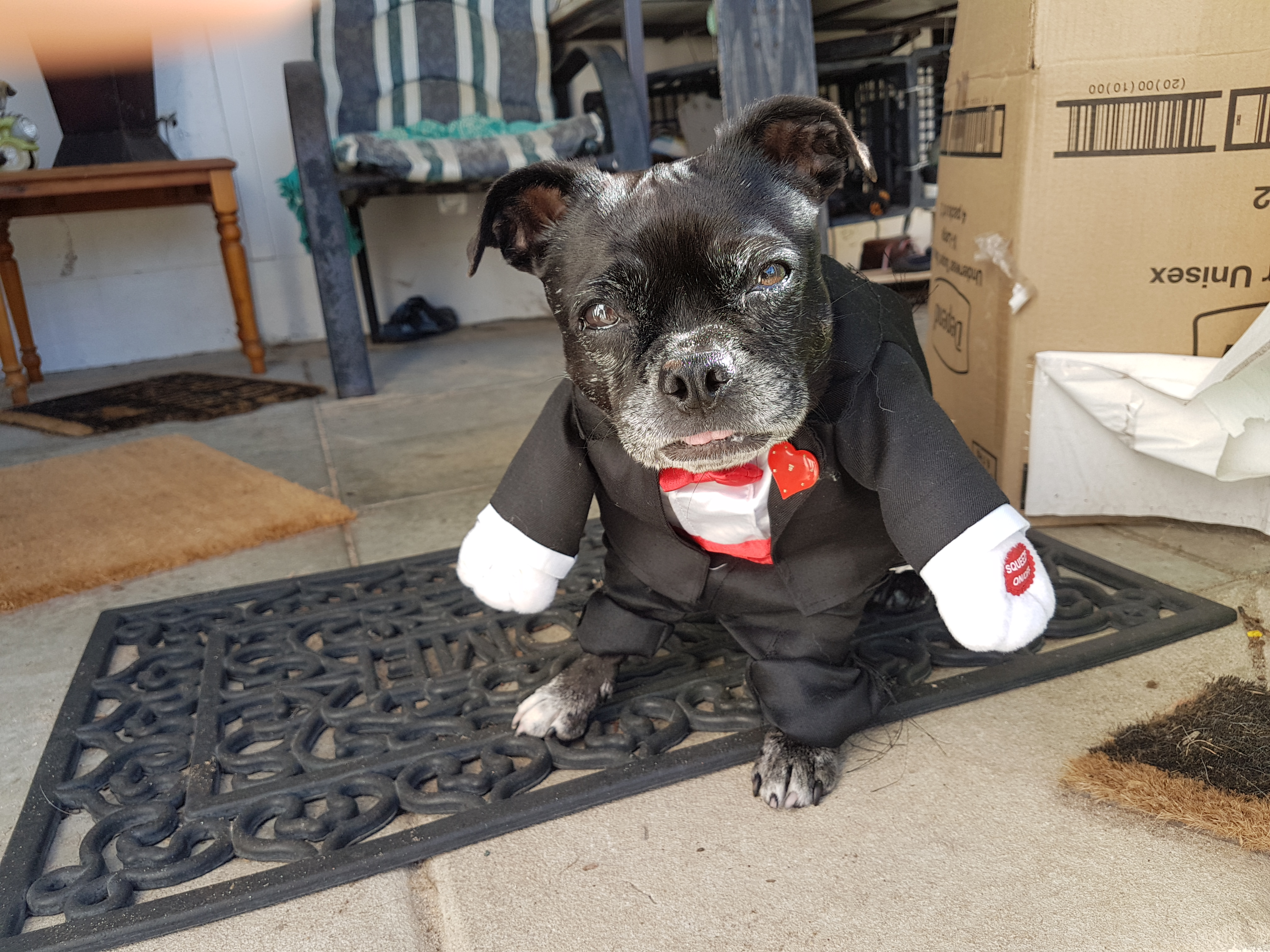Jazzy Devil - my 1st Rescue dog