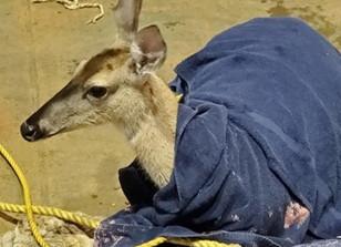 Photo Release: Wildlife Rescue