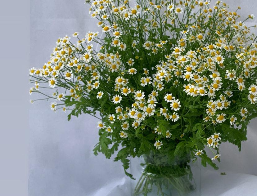 EDEN - Bouquet