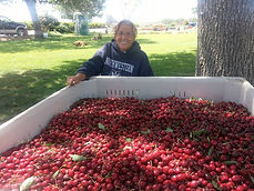 ID Services LLC Co-Founder Robin Butterfield with a beautiful bin of her Brooks Cherries