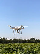 One of ID Services LLc's 1st aerial drone pictures of a grape vineyard