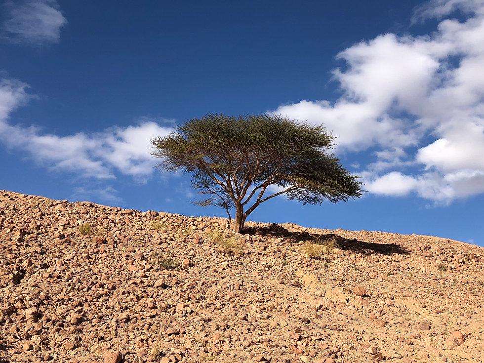 Sinai Tree Retreat 11'2020.jpg