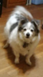 mmacky dog.jpg