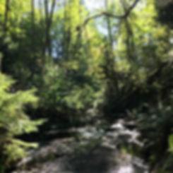 Backyard creek.JPG