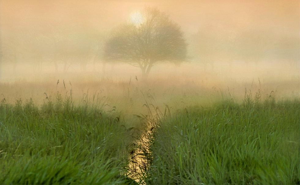 tree-5414030_edited_edited_edited_edited