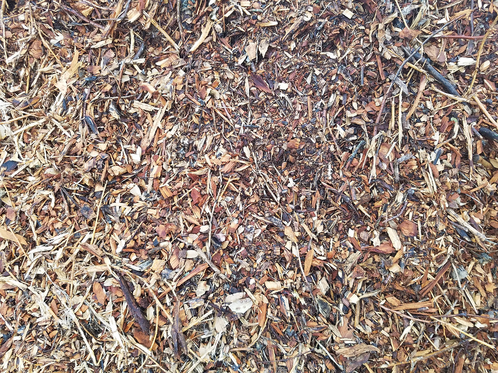 This mulch is fresh out of the chipper.