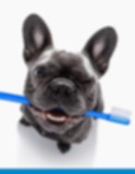 veterinary-dentistry.jpg