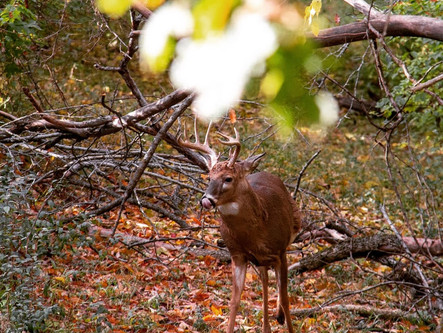 Is Filming Your Hunts Worth The Effort?