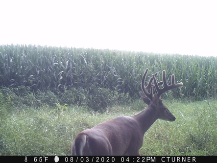Using Trail Cameras To Effectively Fill Buck Tags