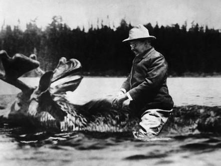 Teddy Roosevelt Rode A Moose!?