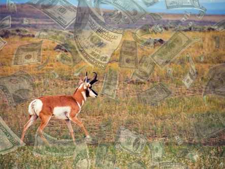 Wyoming Non Resident Hunting License And Tag Fees May Increase By Up To 85%