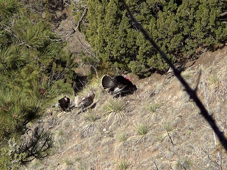 The Best Non-Resident Public Land Hunt In America?