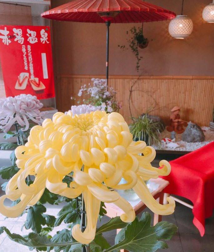 四季彩店内 菊