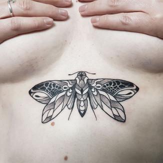moth-11.jpg