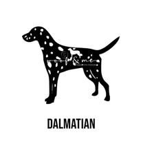 Dalmatian New.jpg
