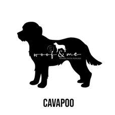 Cavapoo_New.jpg