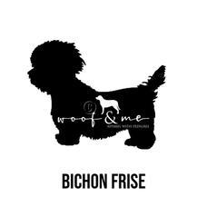 Bichon Frise.jpg