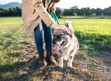 Dog Walking Incidents and How to Deal With Them