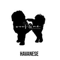 Havanese.jpg