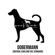 Dobermann_Natural ears.jpg