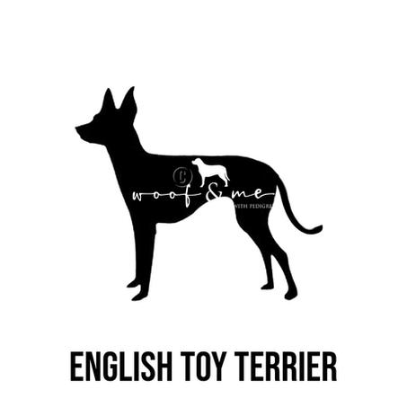 English Toy Terrier.jpg