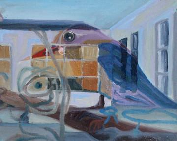 Oil-Bird.jpg
