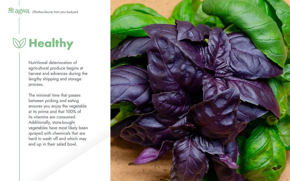 Agwa's Brochure_Page_7.jpg