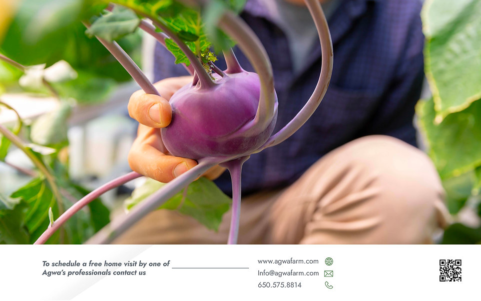 Agwa's Brochure_Page_9.jpg
