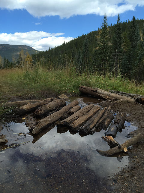 fall mtn logs on pond.jpg