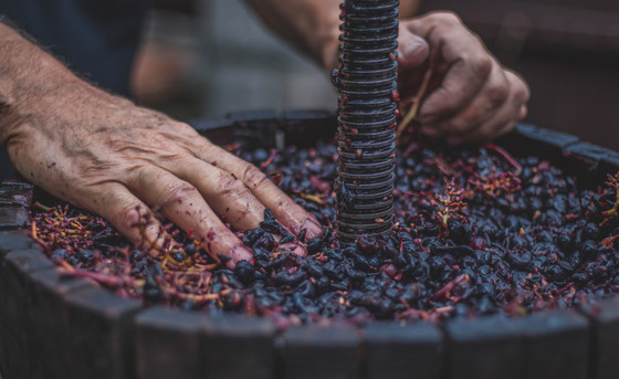Vines to Vino: The comprehensive backyard winemaking guide