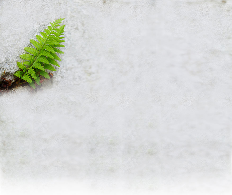 Home-fern-background.png