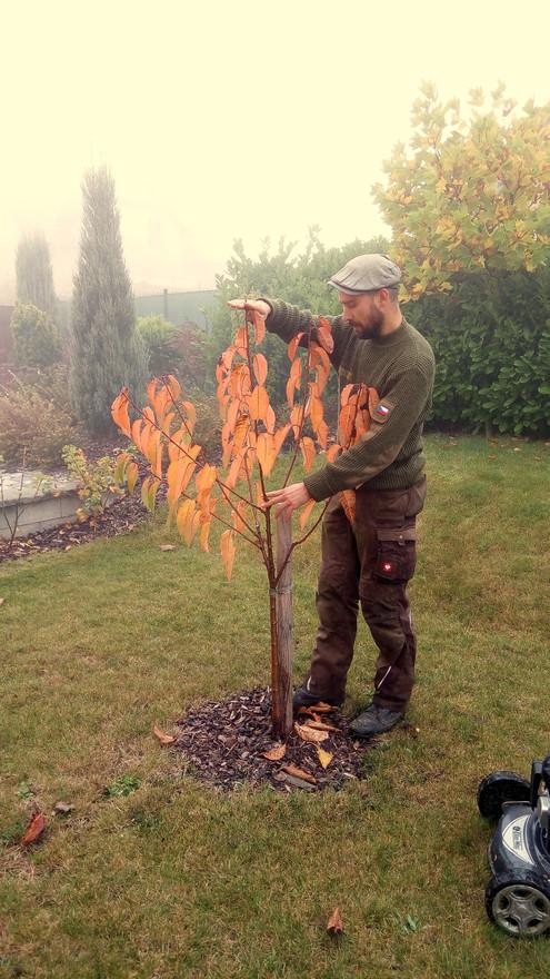 Tvarování a péče o ovocné stromy