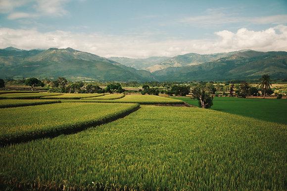 Rizières péruviennes