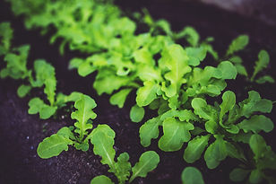 young-salad-5809.jpg
