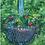 Thumbnail: Flowers IV, Royal Garden, Brussels