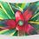 Thumbnail: Guzmania