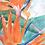 Thumbnail: Strelitzia