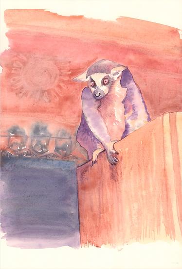 Madagascar's lemur catta