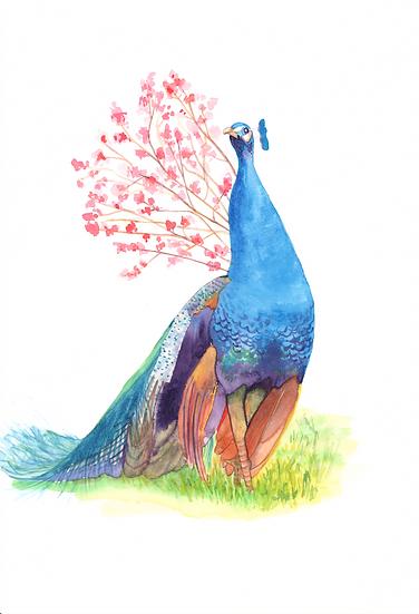 The Peacock in Kasteel van Gaasbeek