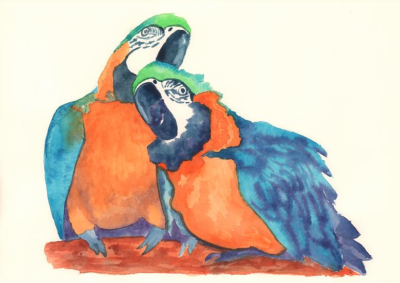 A couple of parrots