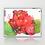 Thumbnail: Flowers VI, Royal Garden, Brussels